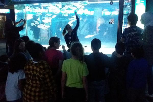 1718-Aquarium bcn (16)
